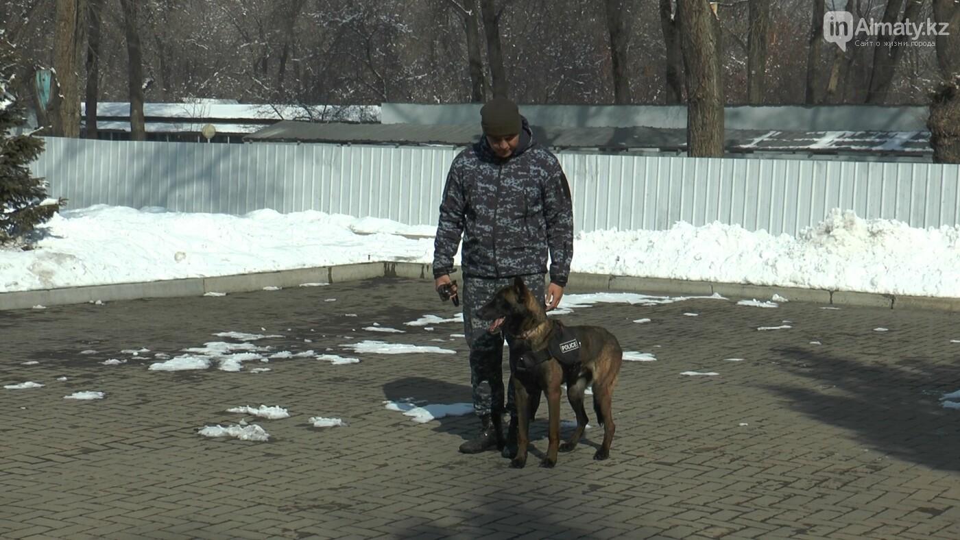 В Алматы детей с аутизмом пробуют лечить собаками, фото-3