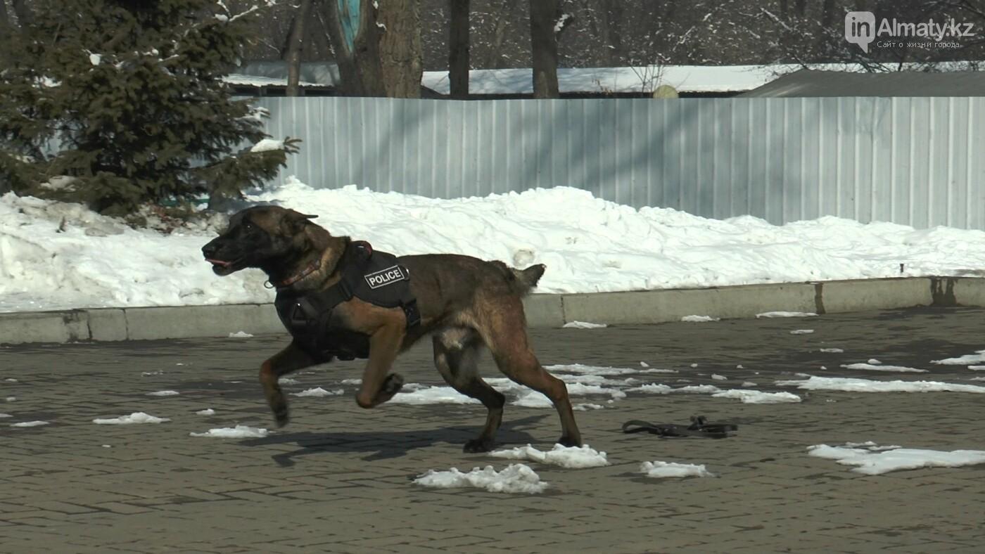 В Алматы детей с аутизмом пробуют лечить собаками, фото-1