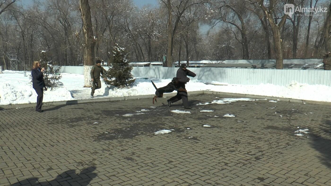 В Алматы детей с аутизмом пробуют лечить собаками, фото-2