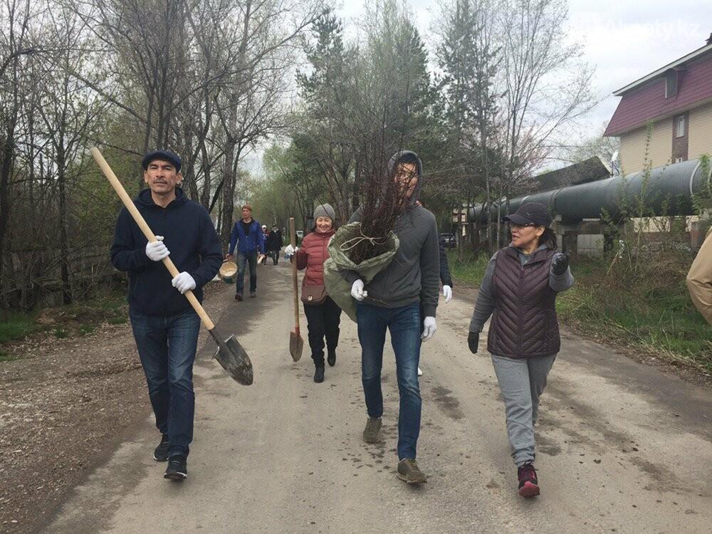200 саженцев яблони Сиверса высадили в Алматы (ФОТО, ВИДЕО), фото-12