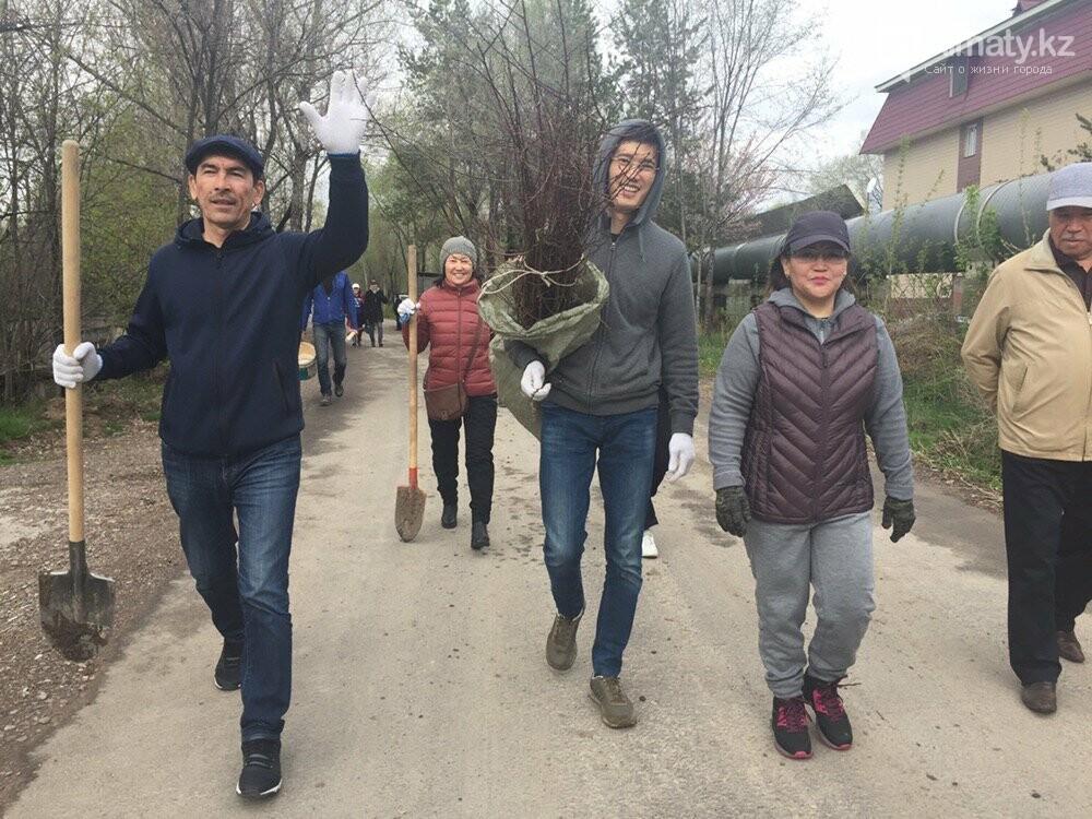 200 саженцев яблони Сиверса высадили в Алматы (ФОТО, ВИДЕО), фото-11