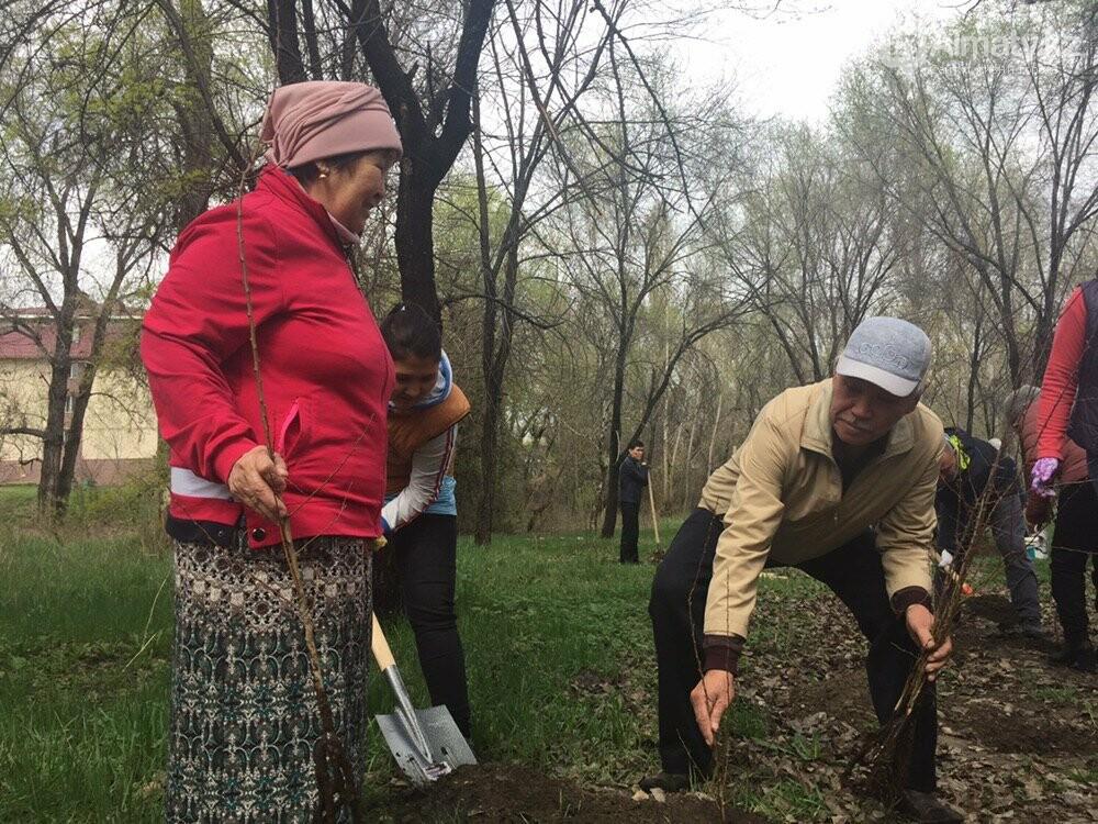 200 саженцев яблони Сиверса высадили в Алматы (ФОТО, ВИДЕО), фото-10