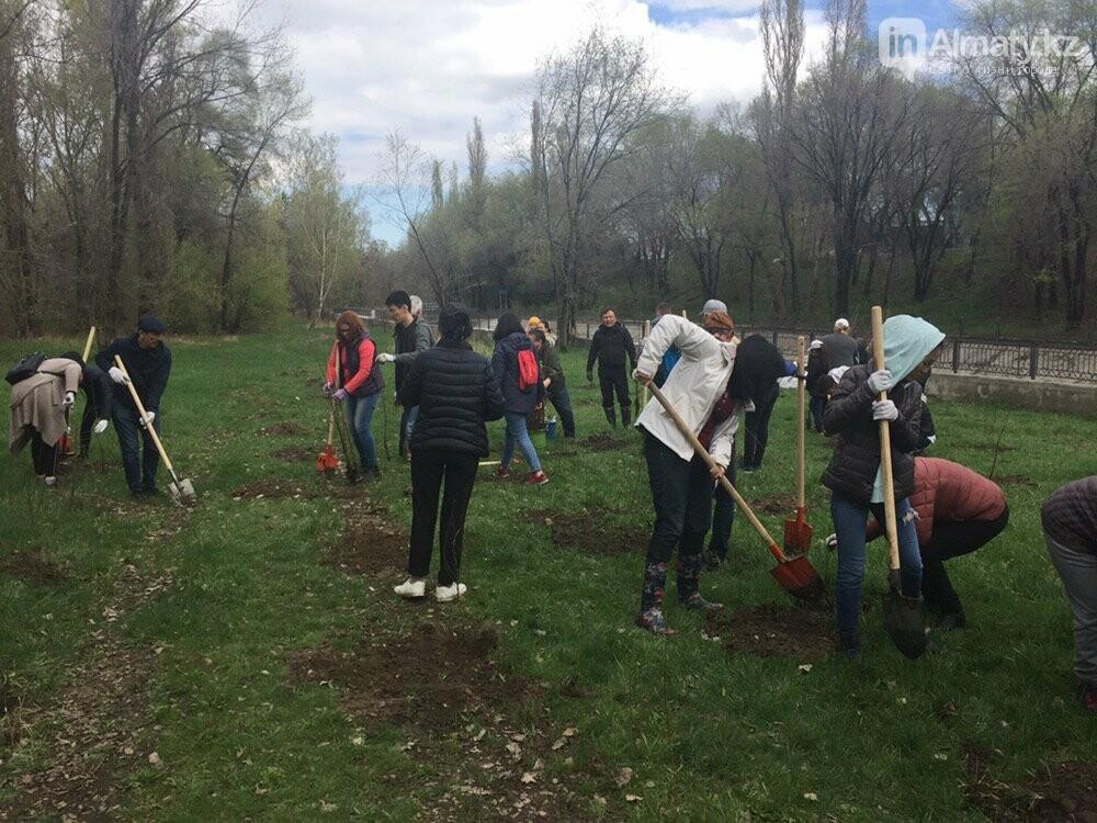 200 саженцев яблони Сиверса высадили в Алматы (ФОТО, ВИДЕО), фото-2