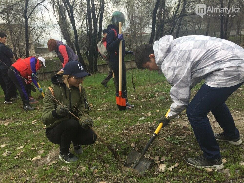 200 саженцев яблони Сиверса высадили в Алматы (ФОТО, ВИДЕО), фото-14