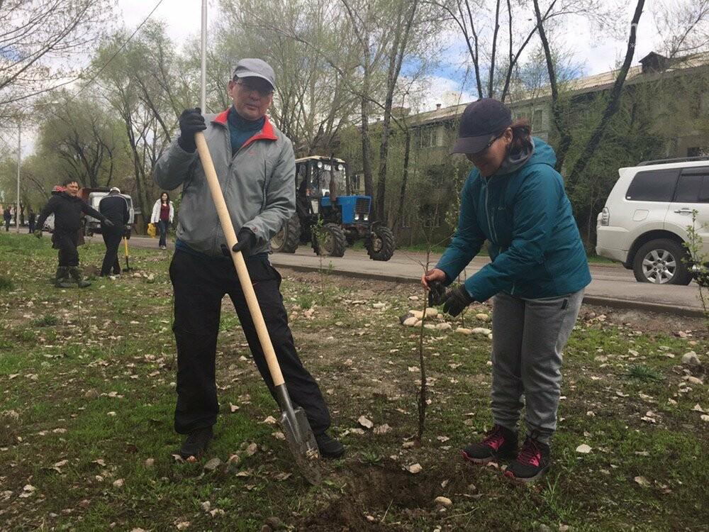 200 саженцев яблони Сиверса высадили в Алматы (ФОТО, ВИДЕО), фото-13