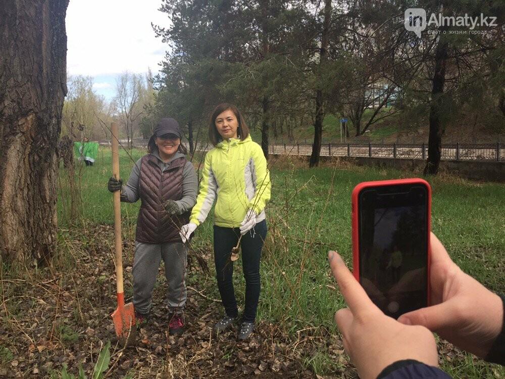 200 саженцев яблони Сиверса высадили в Алматы (ФОТО, ВИДЕО), фото-9