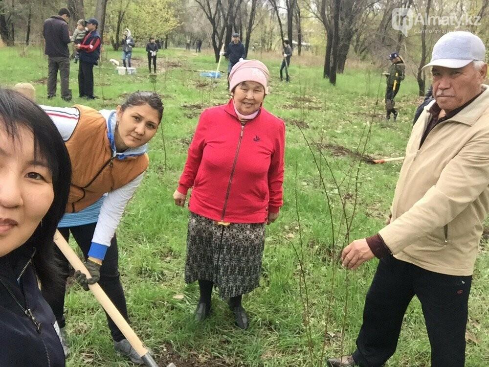 200 саженцев яблони Сиверса высадили в Алматы (ФОТО, ВИДЕО), фото-6