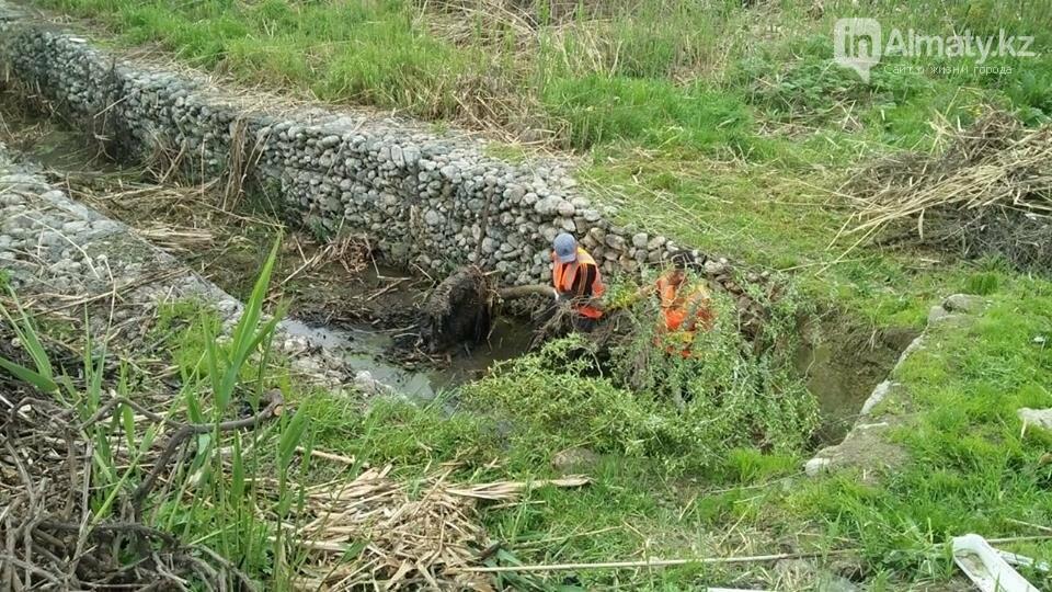 В болото превратились габионные каналы речки Карасу (ФОТО), фото-5