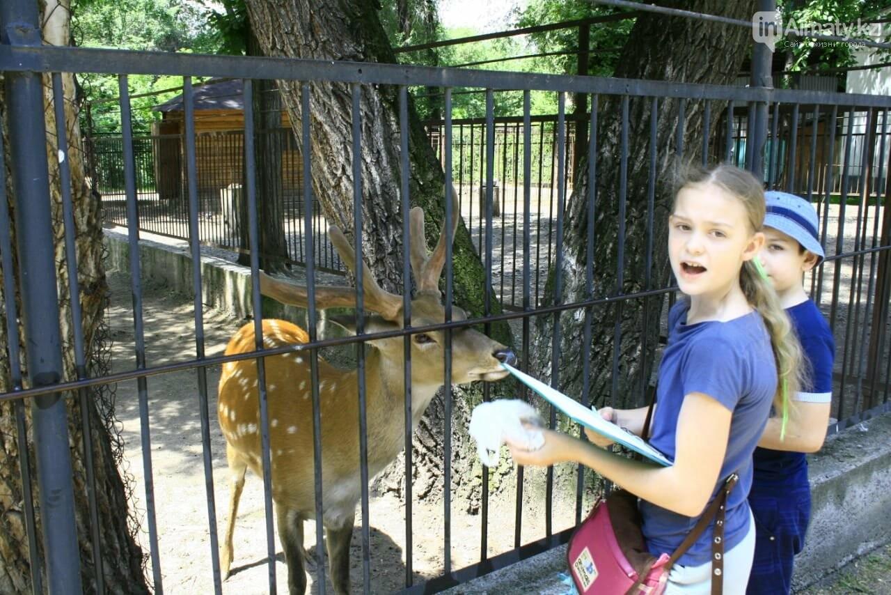 Алматинский зоопарк станет бесплатным на один день, фото-3