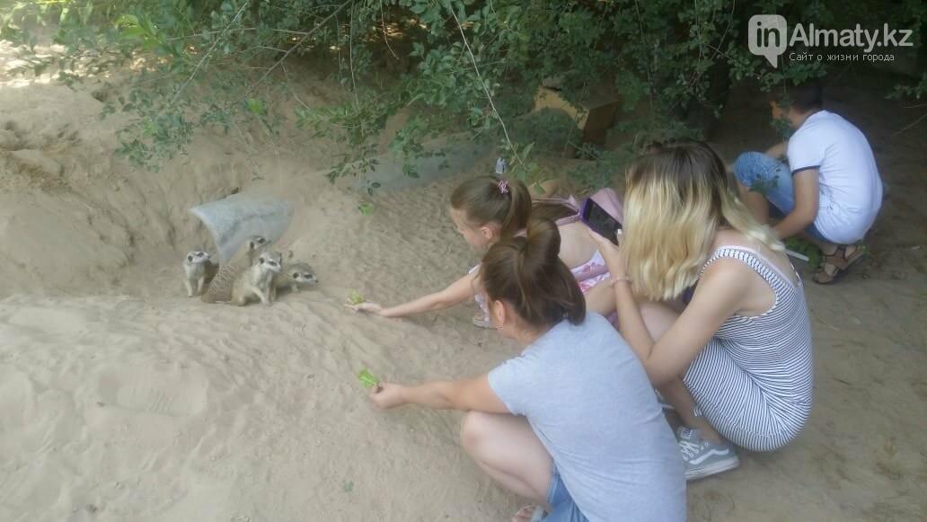 Алматинский зоопарк станет бесплатным на один день, фото-6