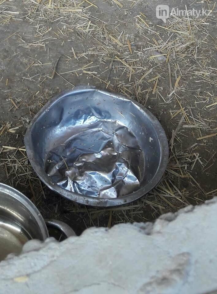 Волонтеры задолжали 250 тысяч тенге ветеринарным клиникам Алматы, фото-5