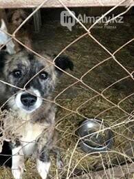 Волонтеры задолжали 250 тысяч тенге ветеринарным клиникам Алматы, фото-6