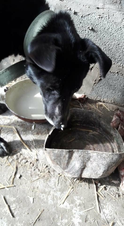 Волонтеры задолжали 250 тысяч тенге ветеринарным клиникам Алматы, фото-1