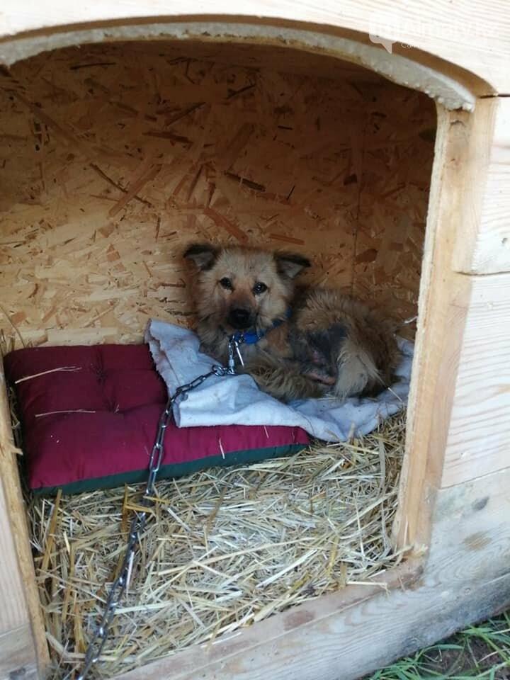 Волонтеры задолжали 250 тысяч тенге ветеринарным клиникам Алматы, фото-7