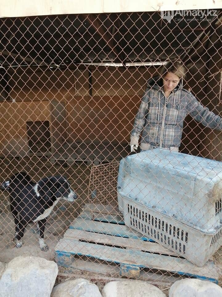 Волонтеры задолжали 250 тысяч тенге ветеринарным клиникам Алматы, фото-3