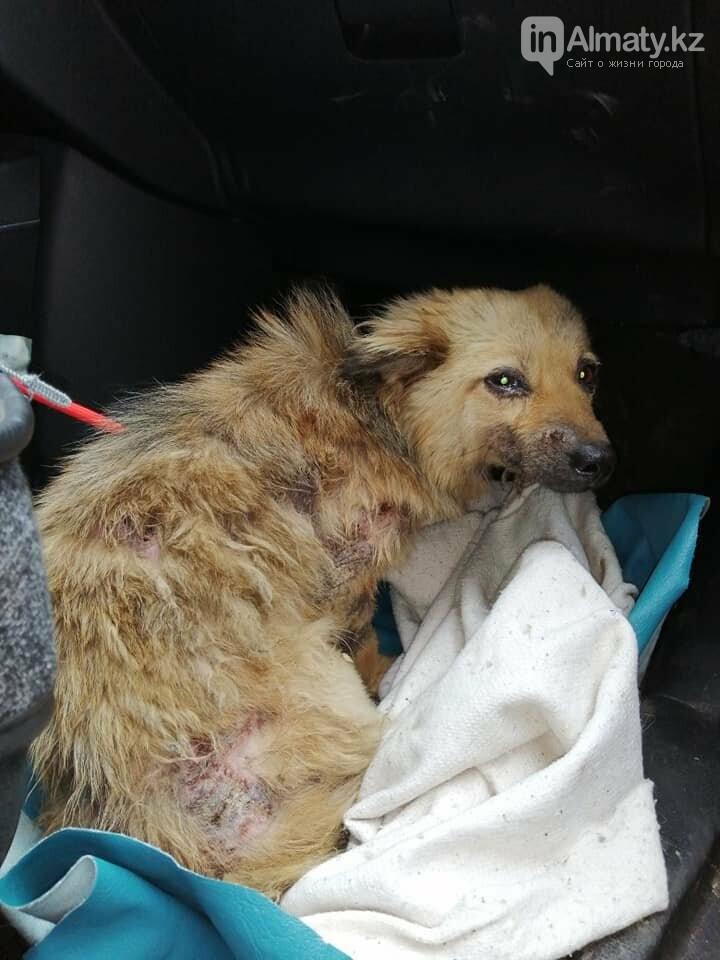 Волонтеры задолжали 250 тысяч тенге ветеринарным клиникам Алматы, фото-2