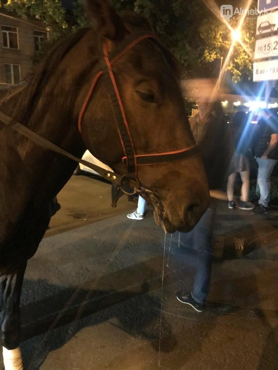 """Истощённых лошадей заметили за """"работой"""" у ночного клуба в Алматы , фото-2"""