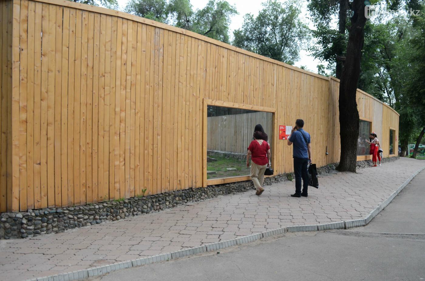 Барсы могут появиться здесь осенью: интервью нового директора Алматинского зоопарка, фото-9