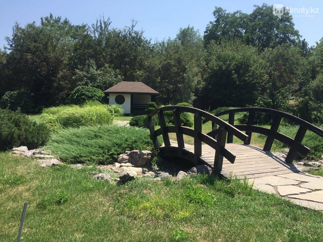 Ради спасения двух сосен вход в Ботанический сад сделают двухуровневым, фото-5