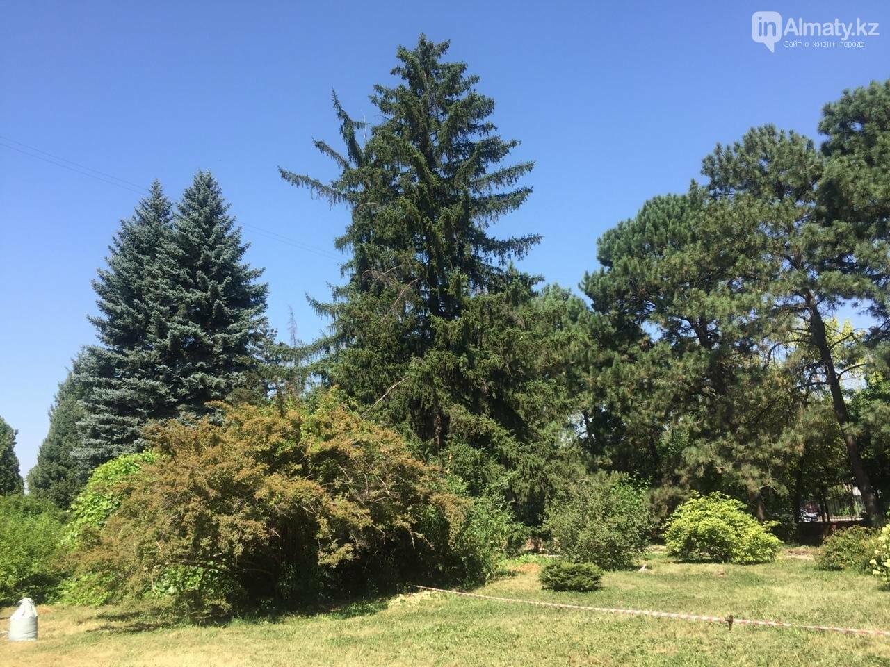Ради спасения двух сосен вход в Ботанический сад сделают двухуровневым, фото-1
