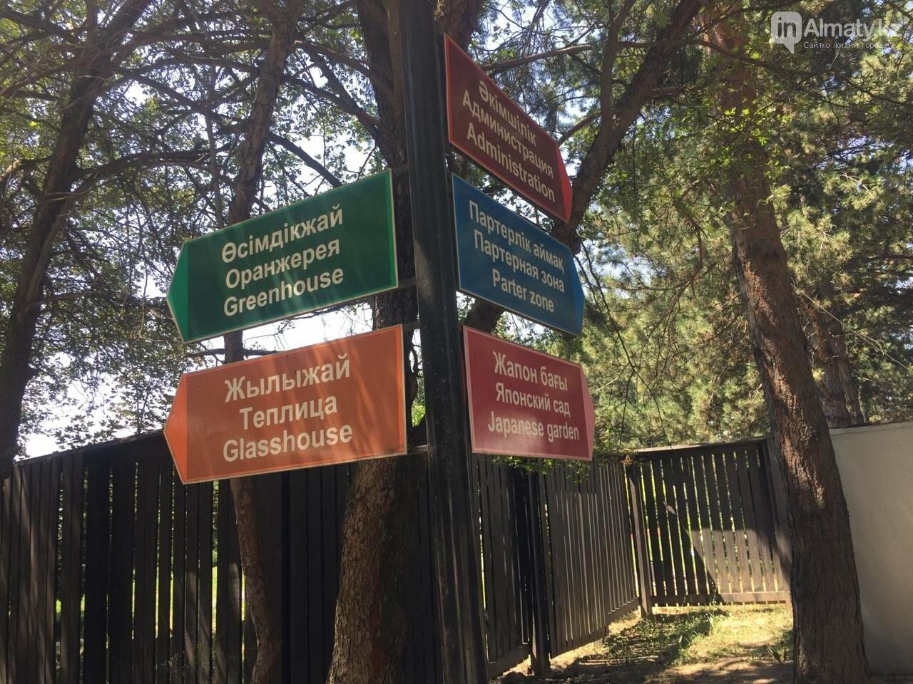 Ради спасения двух сосен вход в Ботанический сад сделают двухуровневым, фото-2