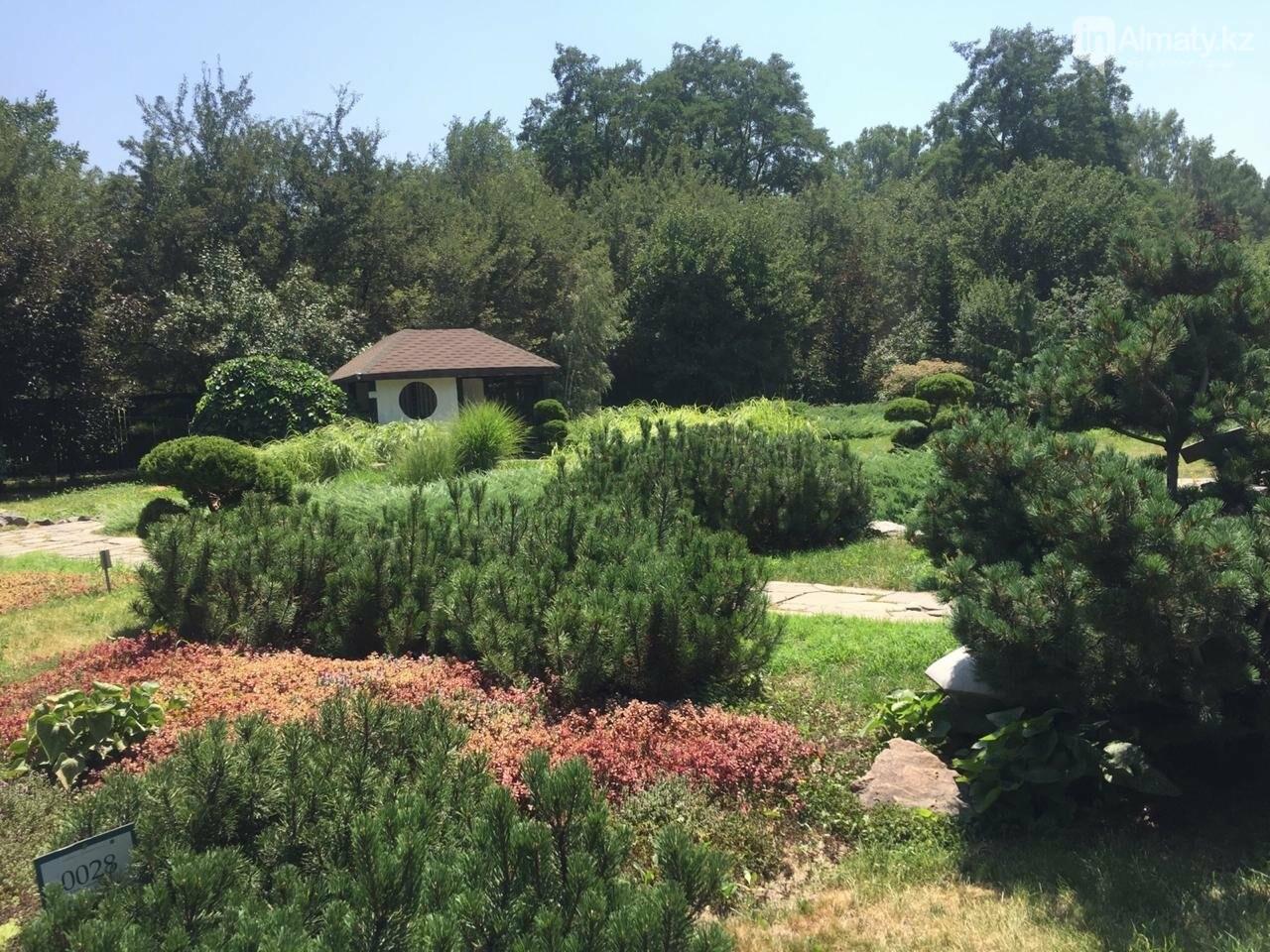 Ради спасения двух сосен вход в Ботанический сад сделают двухуровневым, фото-3