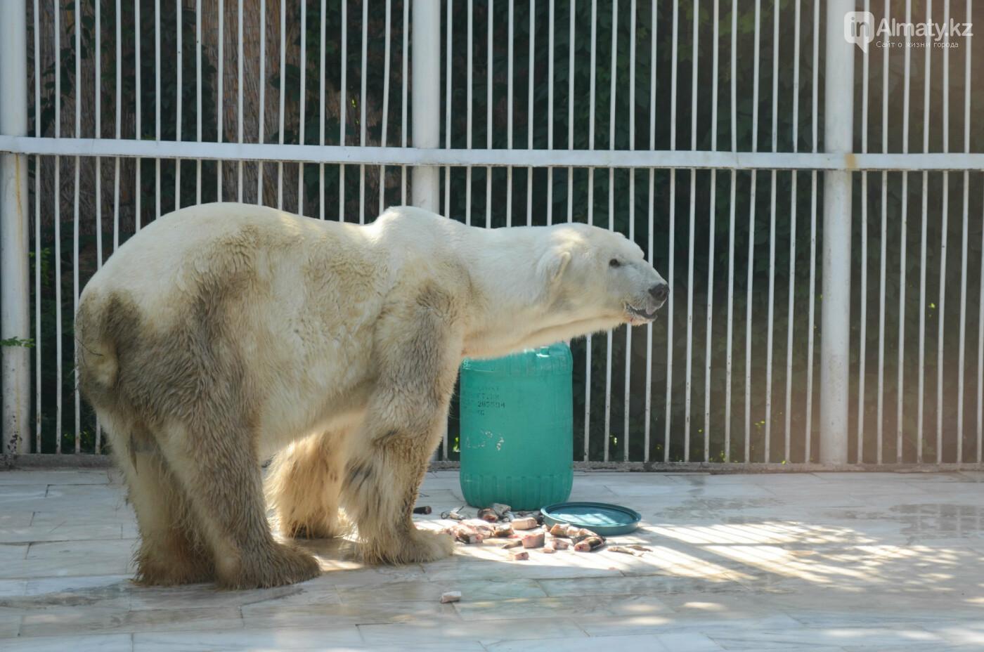 В Алматинском зоопарке показали, как живет пожилой медведь Алькор (видео), фото-5
