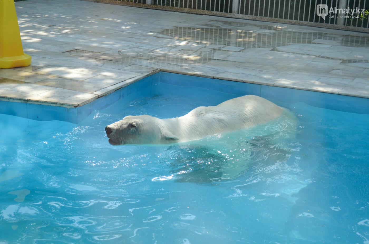 В Алматинском зоопарке показали, как живет пожилой медведь Алькор (видео), фото-2
