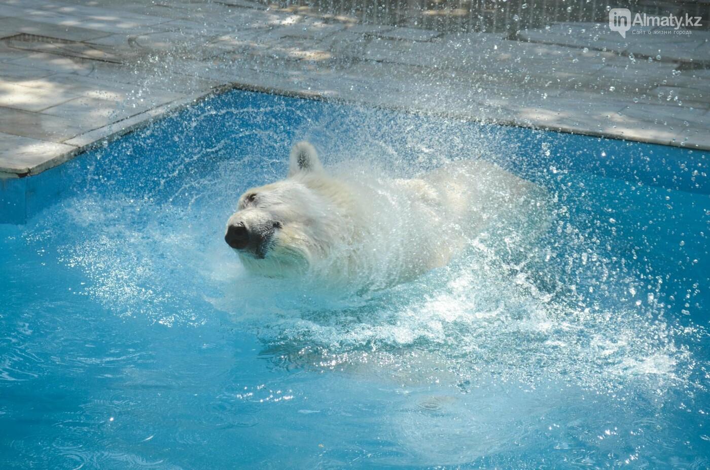 В Алматинском зоопарке показали, как живет пожилой медведь Алькор (видео), фото-1