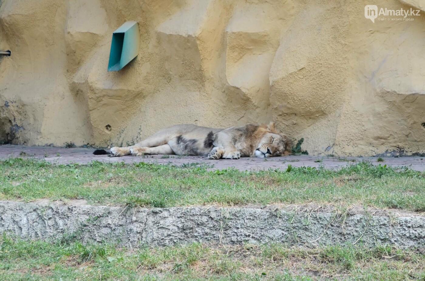 Недостатки ветеринарии и трагические совпадения: В Алматинском зоопарке рассказали причины смерти животных, фото-2