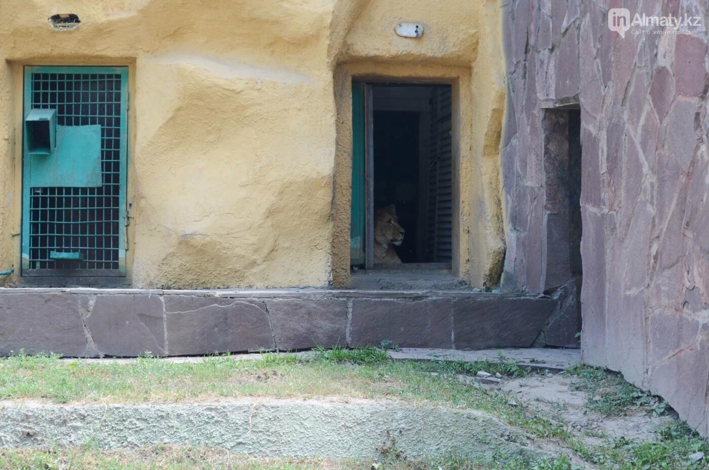 Недостатки ветеринарии и трагические совпадения: В Алматинском зоопарке рассказали причины смерти животных, фото-3