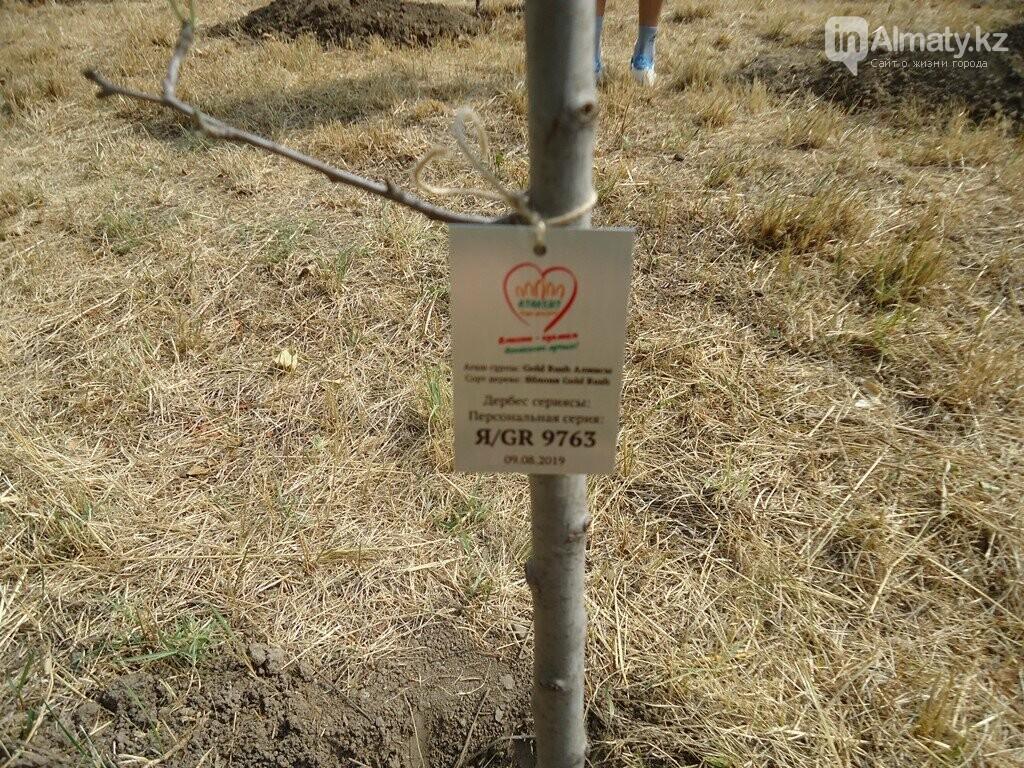 На Аллее журналистов в Алматы высадили яблони (фото), фото-6