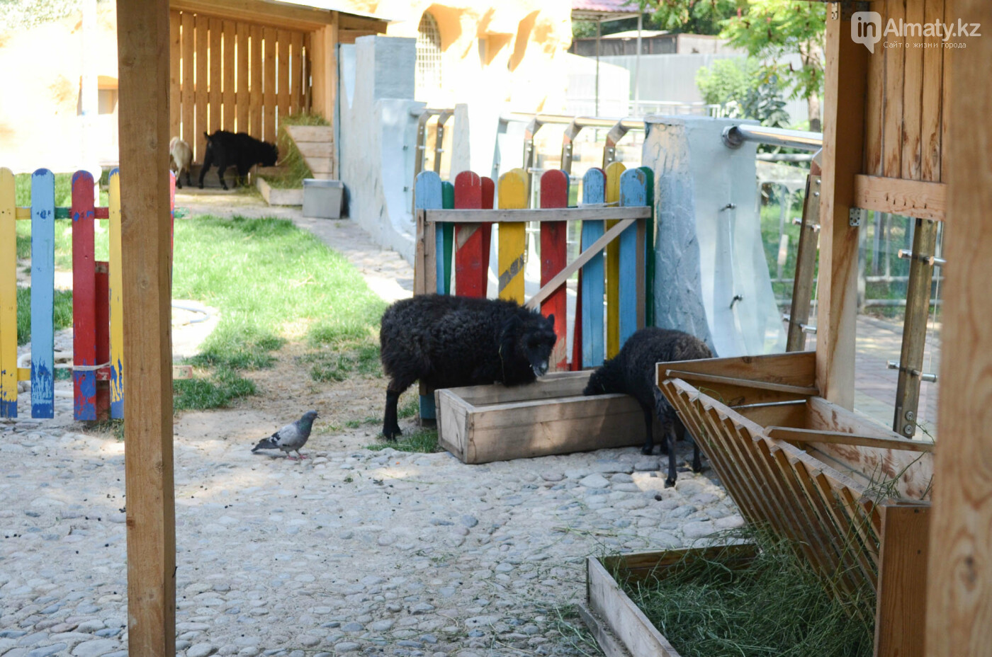 Как живут обитатели контактной секции Алматинского зоопарка (фото), фото-3