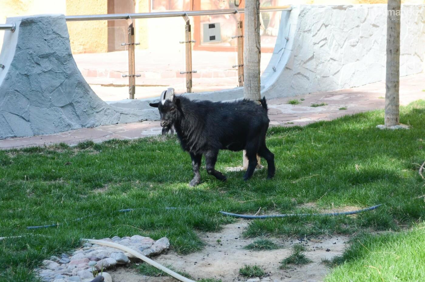 Как живут обитатели контактной секции Алматинского зоопарка (фото), фото-4