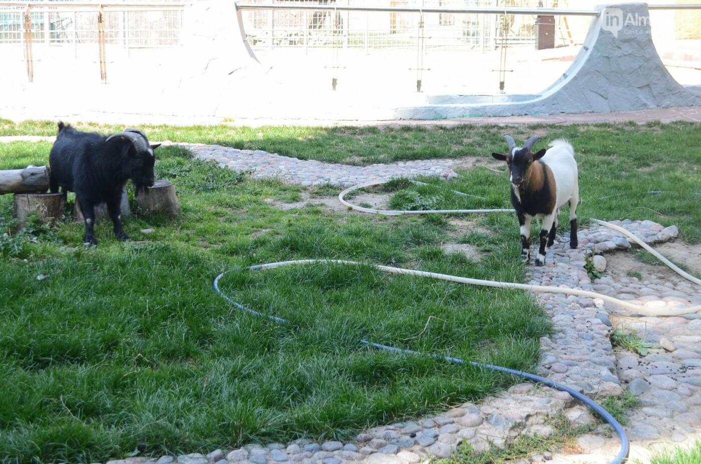 Как живут обитатели контактной секции Алматинского зоопарка (фото), фото-2