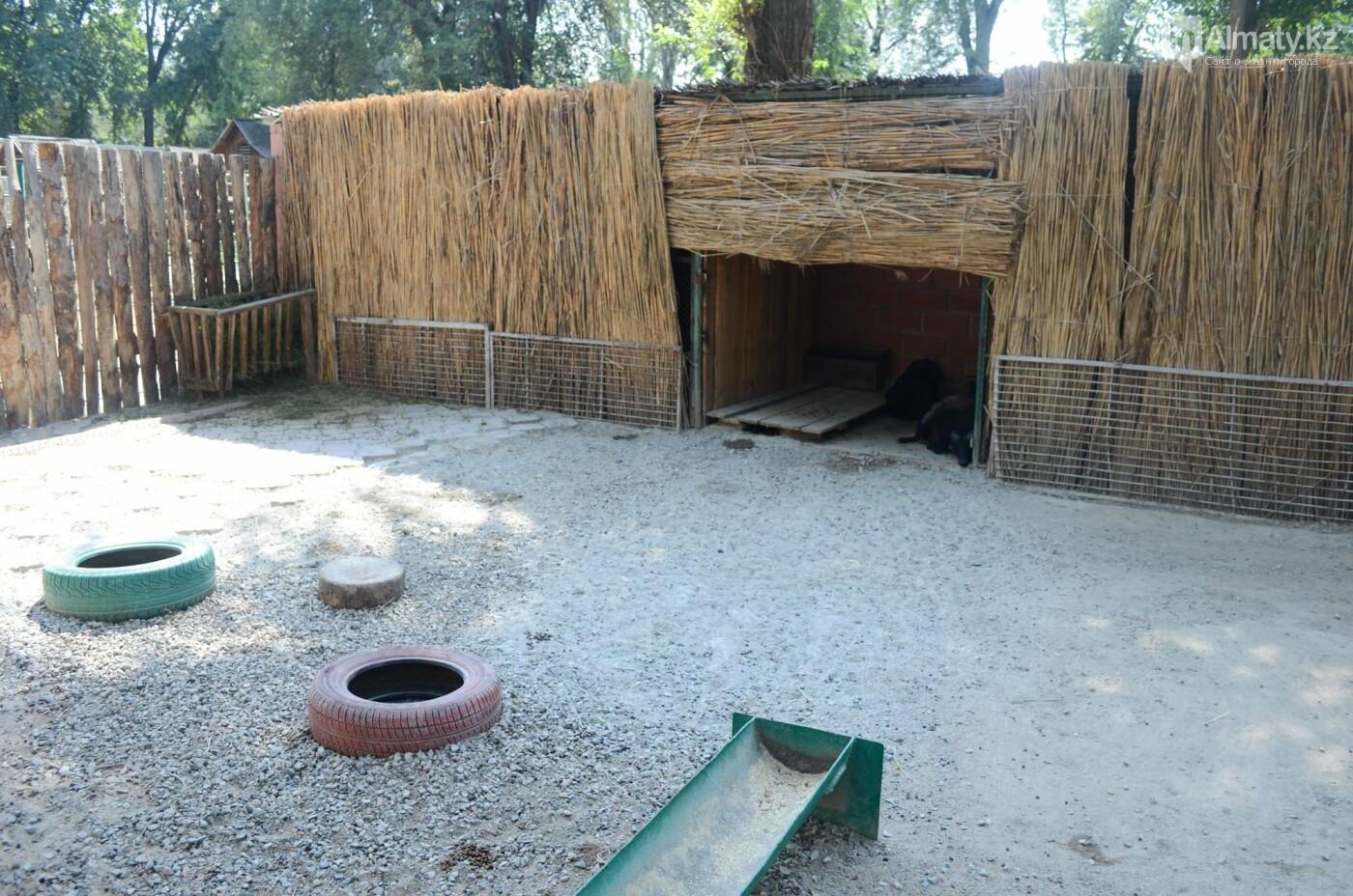 Как живут обитатели контактной секции Алматинского зоопарка (фото), фото-7