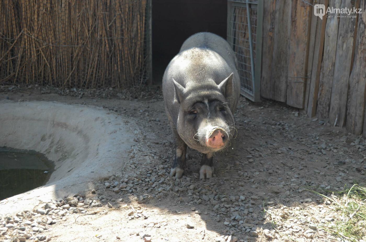 Как живут обитатели контактной секции Алматинского зоопарка (фото), фото-6