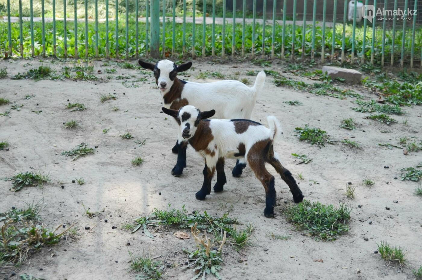 Как живут обитатели контактной секции Алматинского зоопарка (фото), фото-9