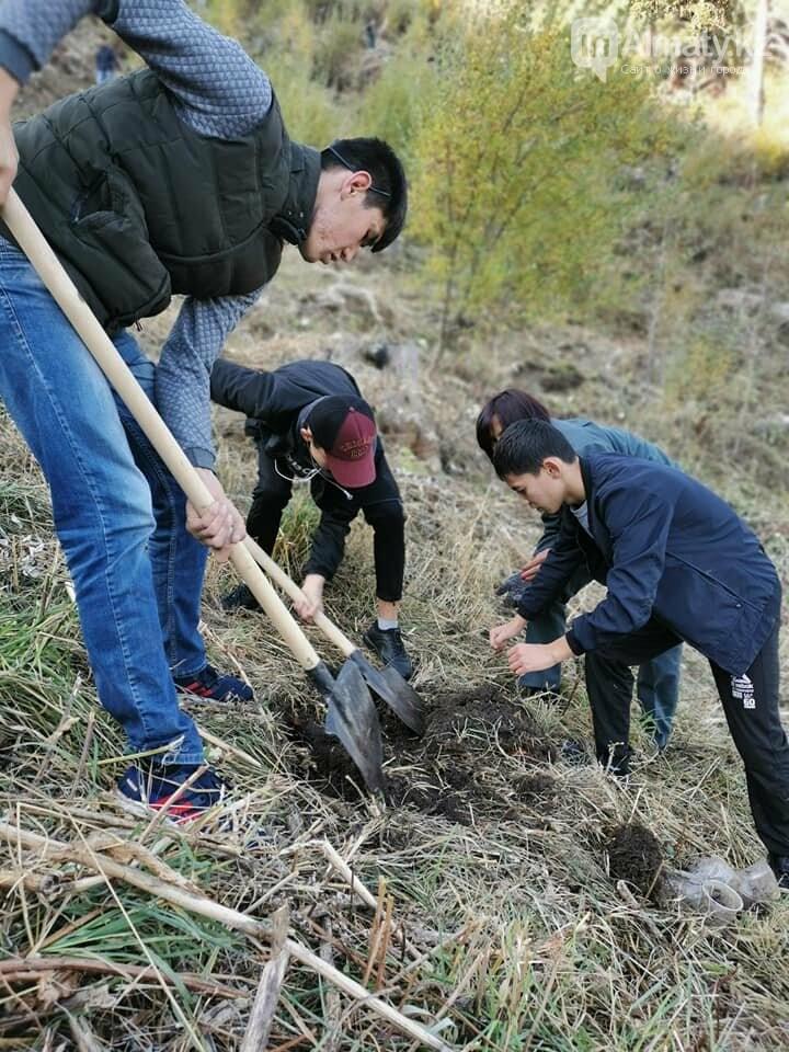 В горах близ Алматы высадили 50 тысяч саженцев ели Шренка, фото-1