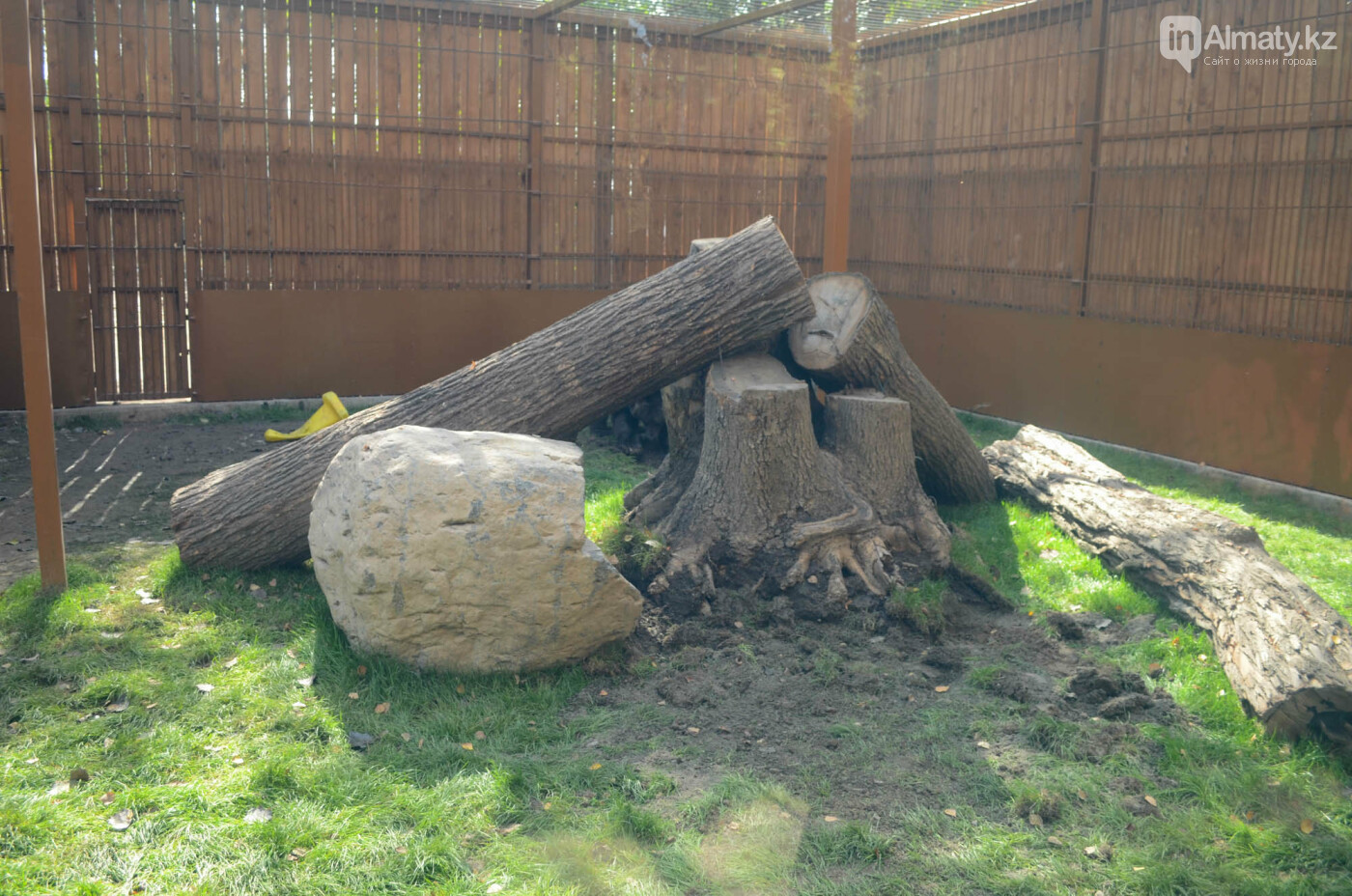 Медведь Акжолтай обрел новый дом в алматинском зоопарке (фото), фото-4