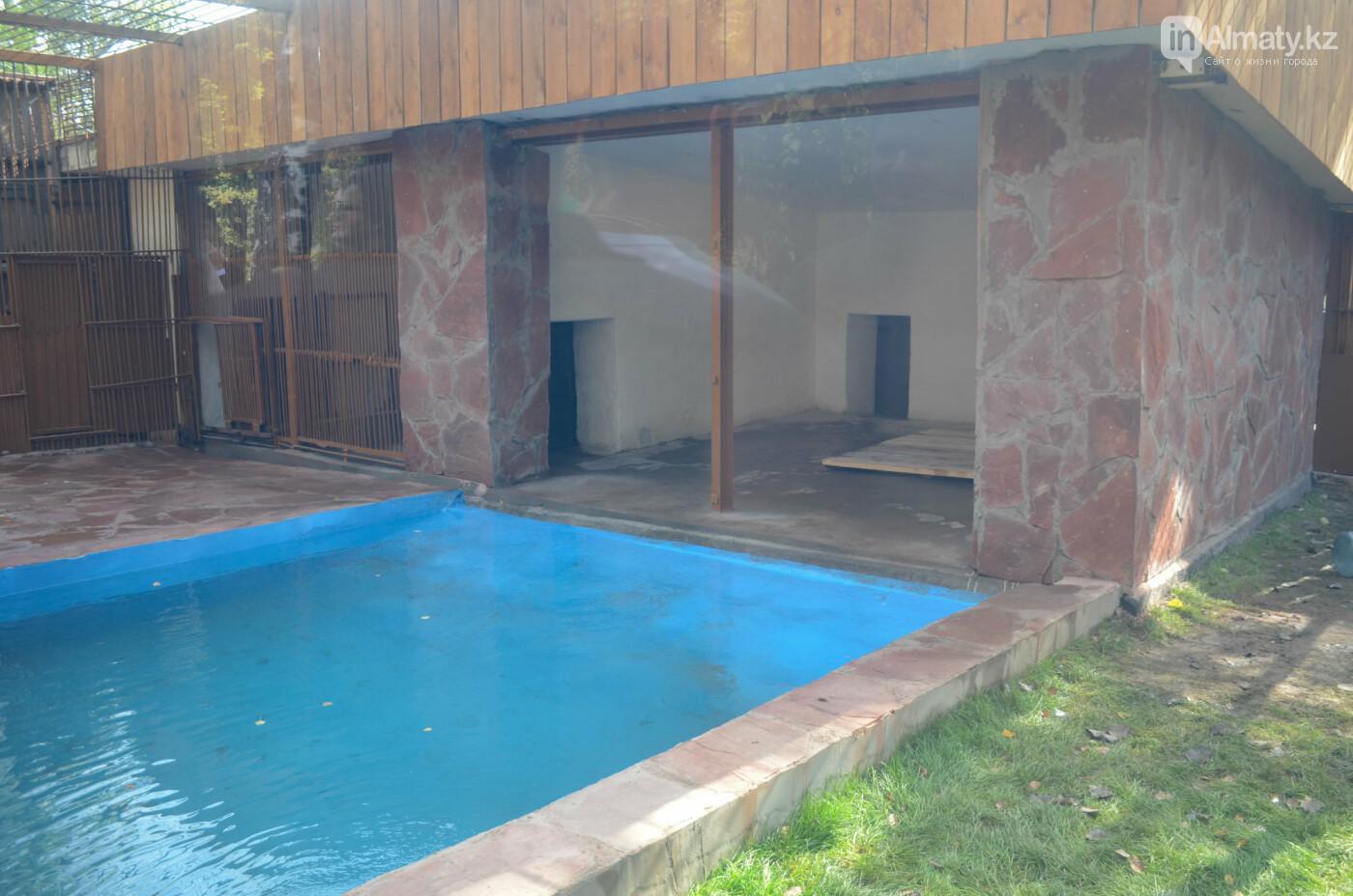 Медведь Акжолтай обрел новый дом в алматинском зоопарке (фото), фото-3