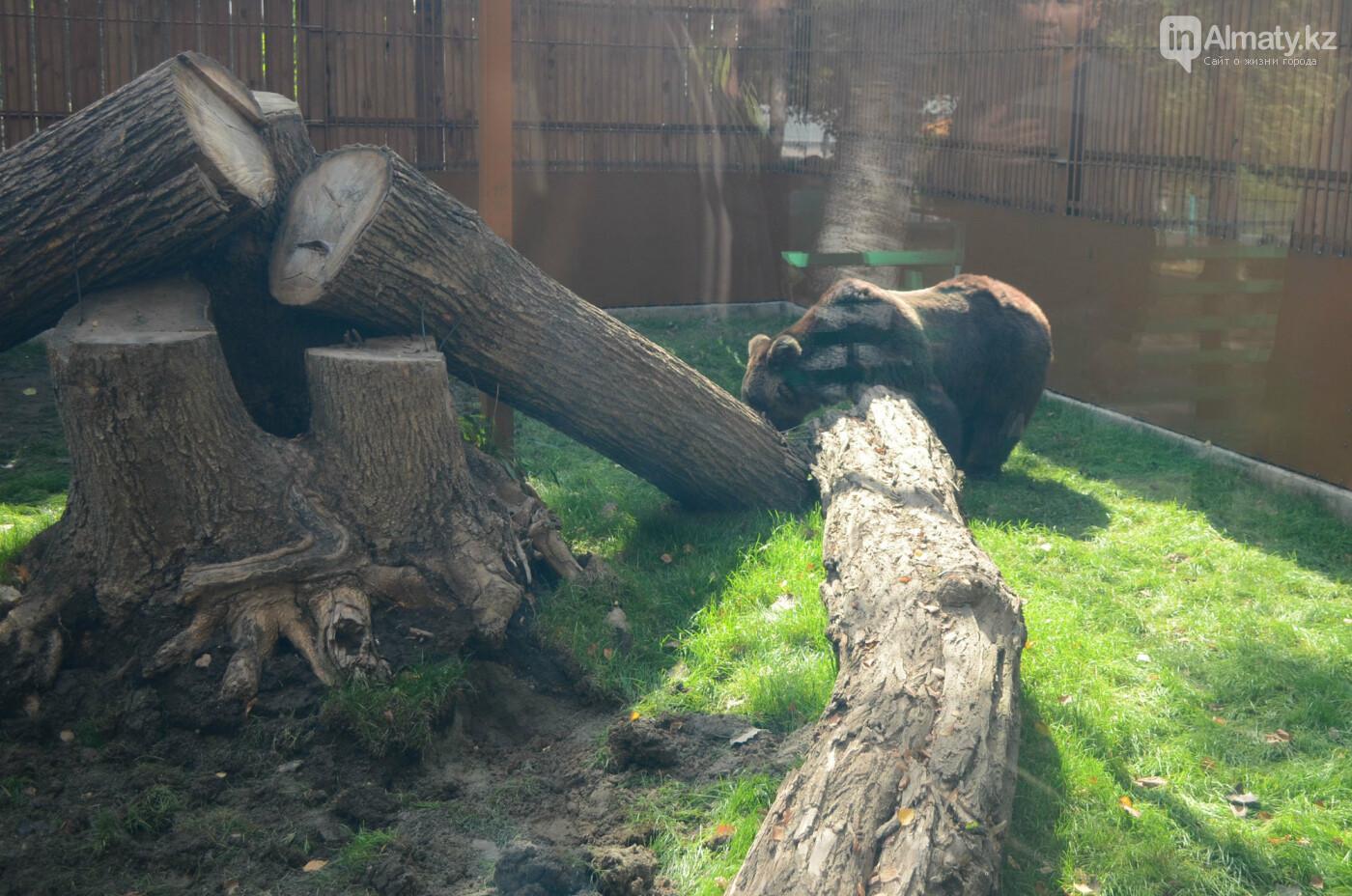 Медведь Акжолтай обрел новый дом в алматинском зоопарке (фото), фото-1