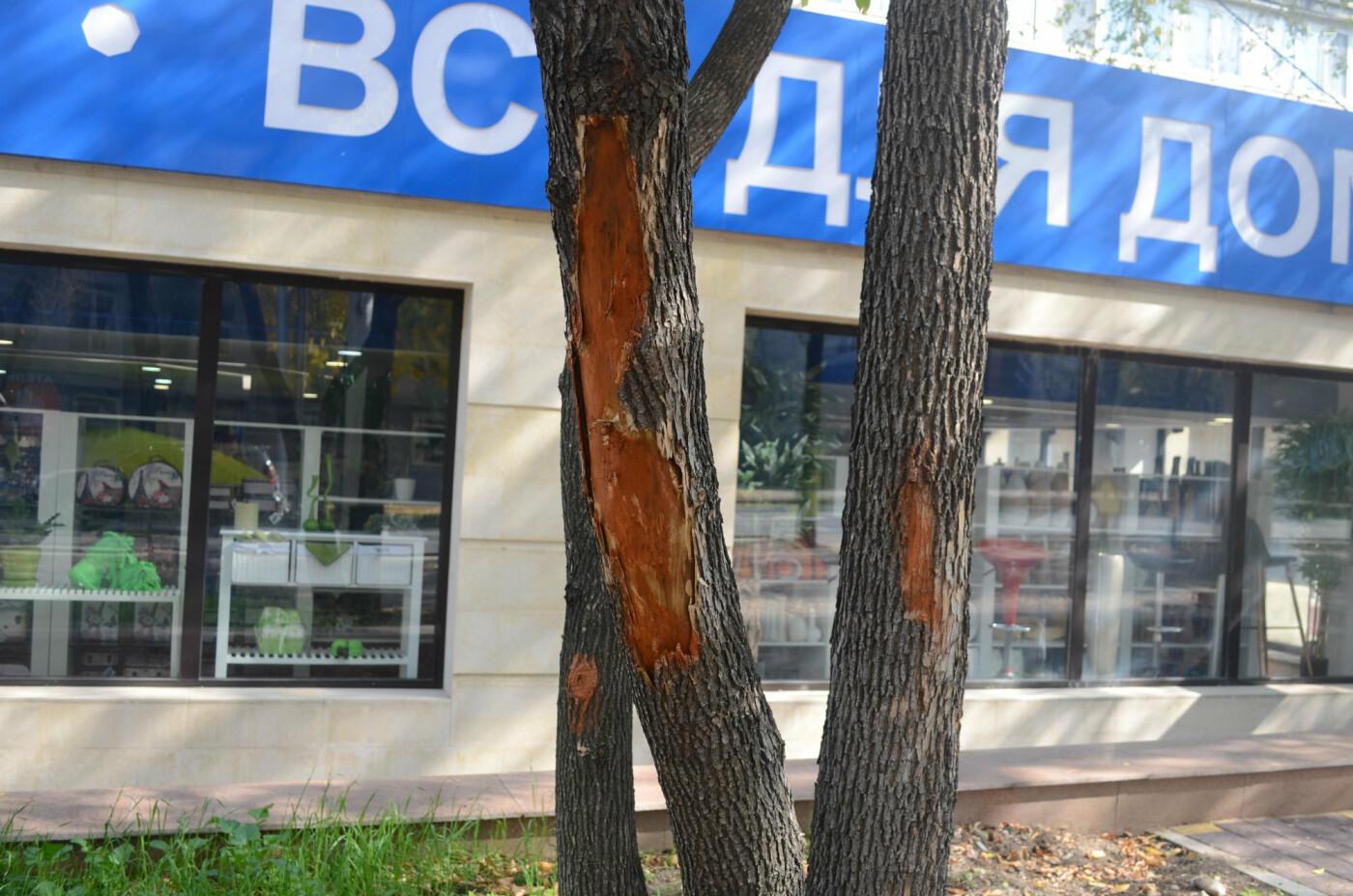 Как изменилась пешеходная часть проспекта Достык в Алматы (фото), фото-10