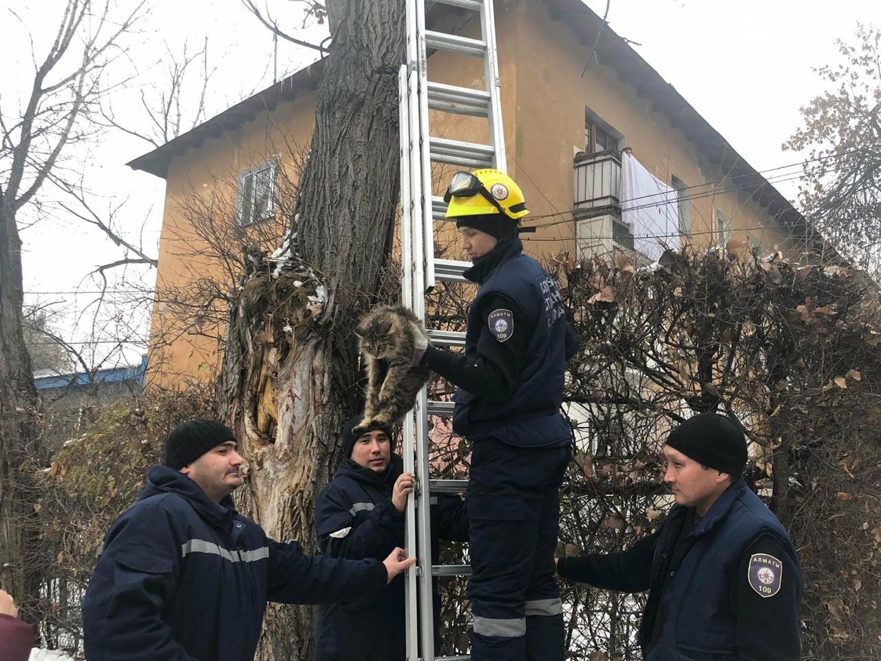 Алматинские спасатели сняли кошку с высокого дерева (фото, видео) , фото-1