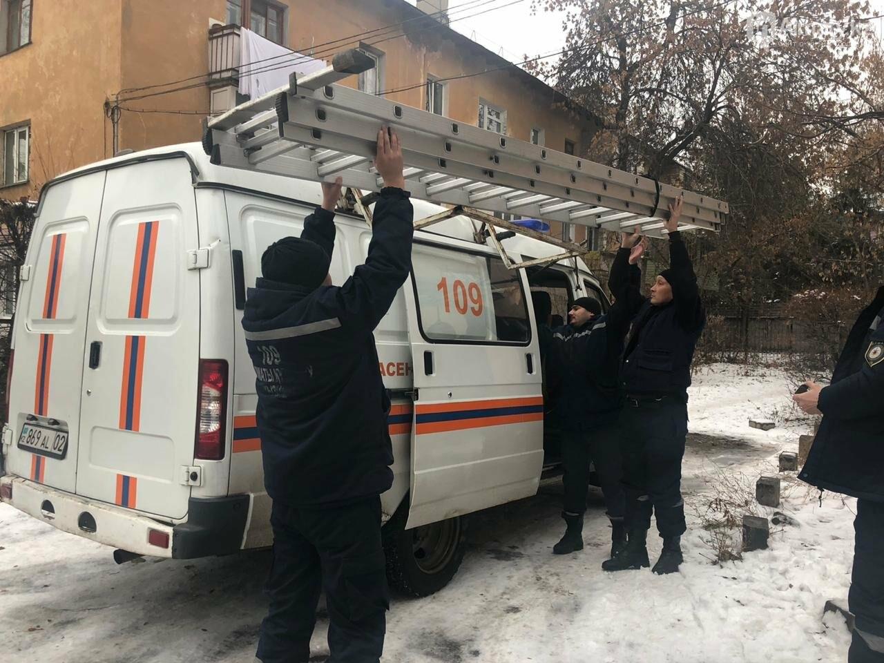 Алматинские спасатели сняли кошку с высокого дерева (фото, видео) , фото-2