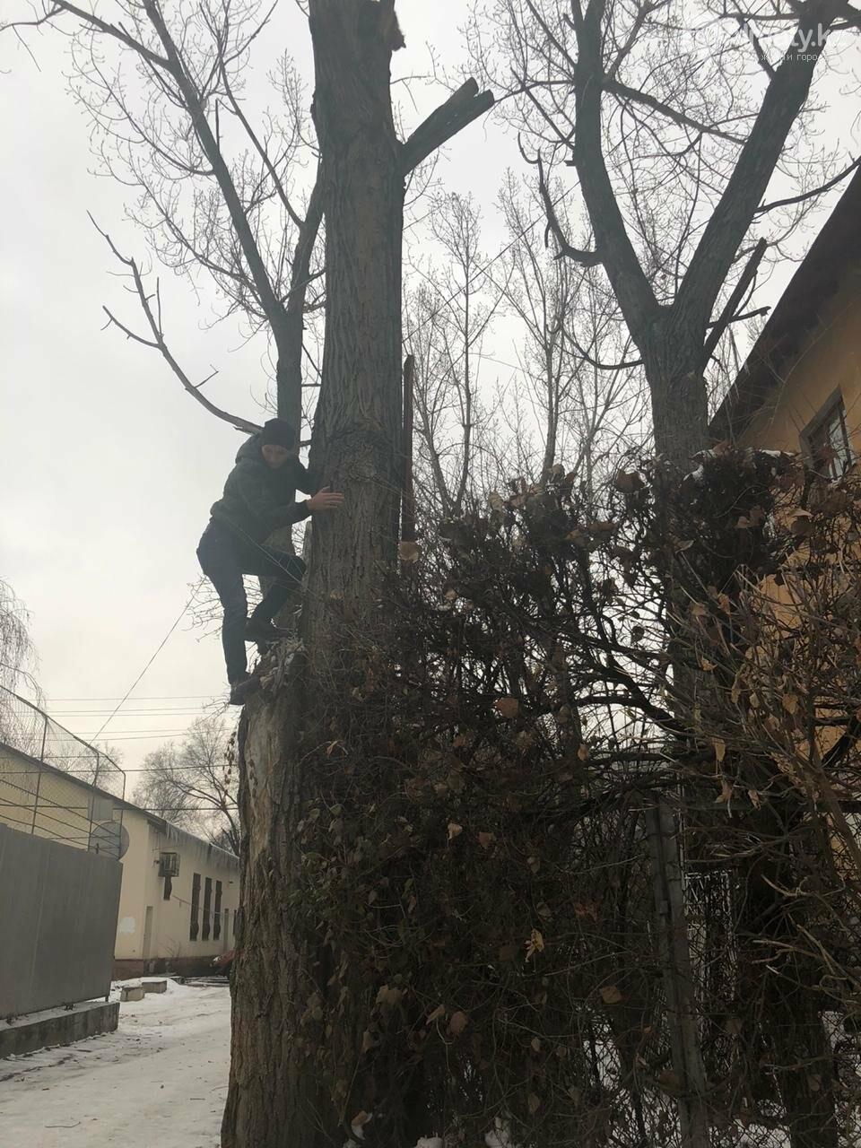 Алматинские спасатели сняли кошку с высокого дерева (фото, видео) , фото-4