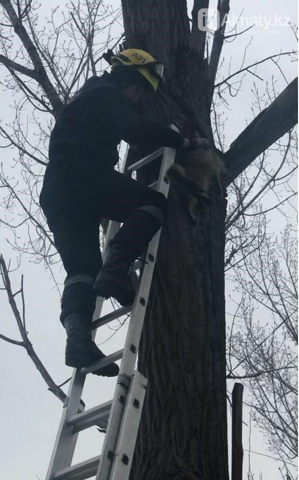 Алматинские спасатели сняли кошку с высокого дерева (фото, видео) , фото-5