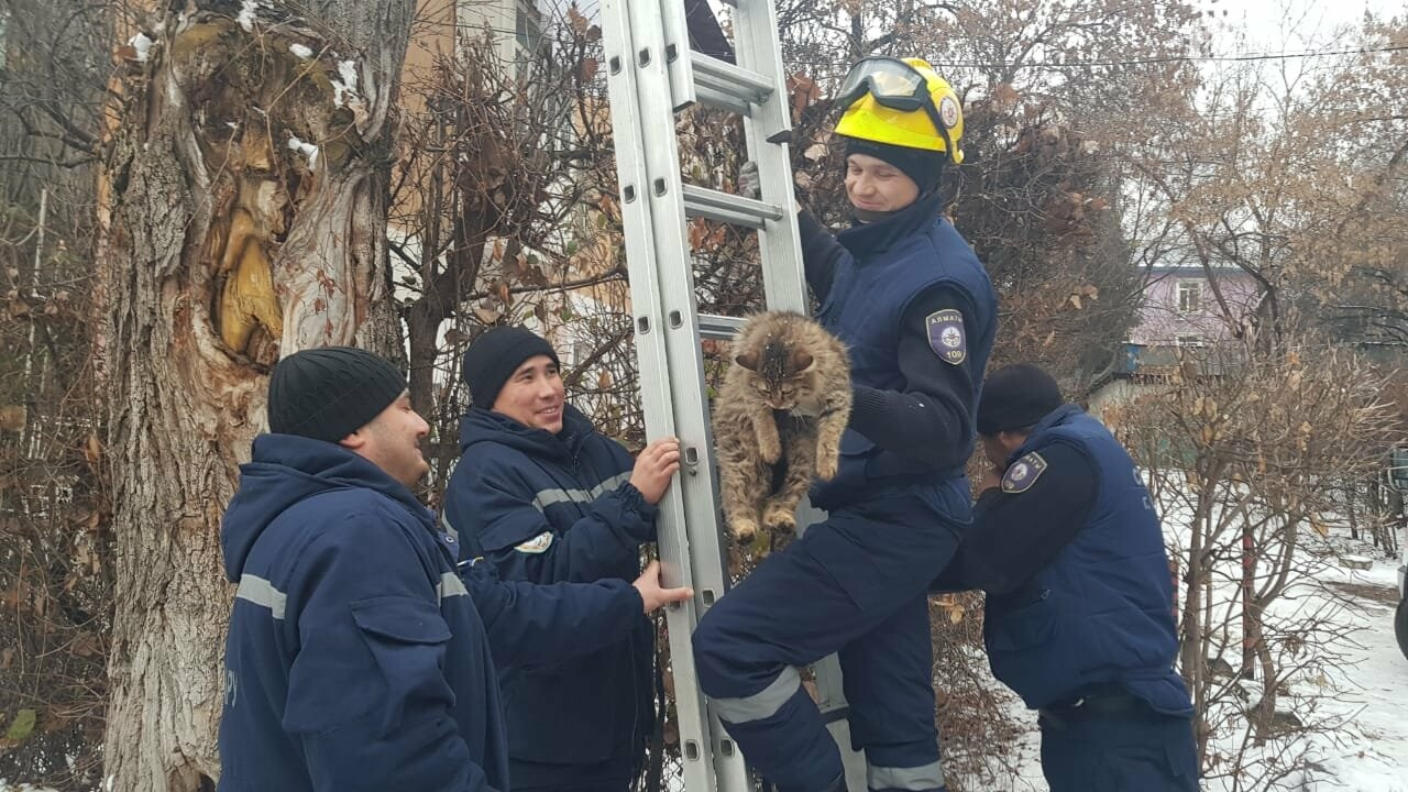 Алматинские спасатели сняли кошку с высокого дерева (фото, видео) , фото-6
