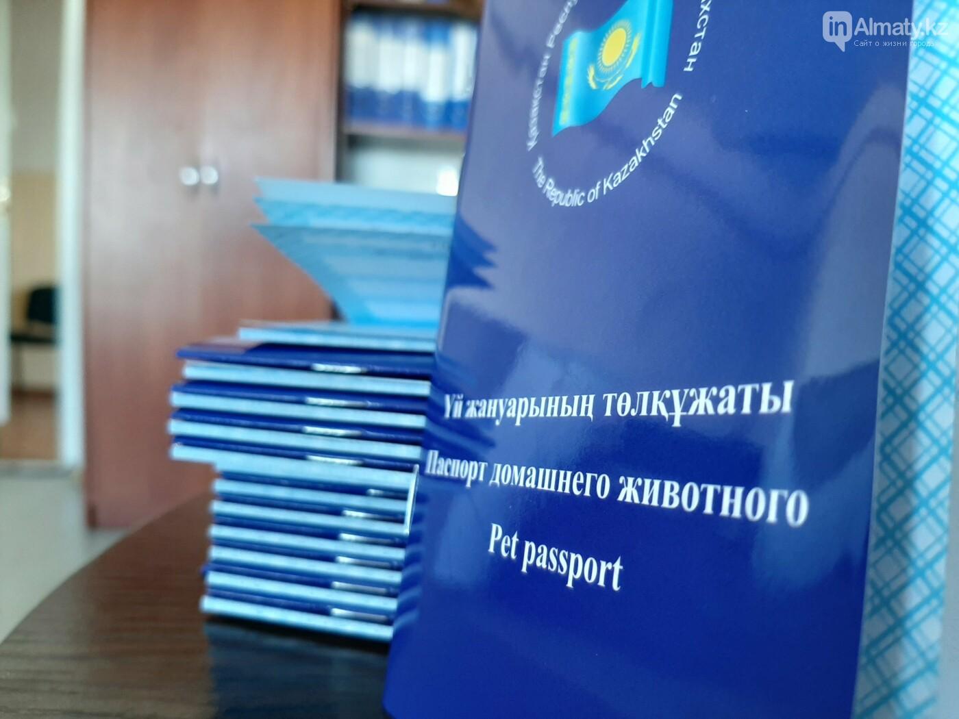 Как проходит бесплатное чипирование собак и кошек в Алматы. Фото/видео, фото-7