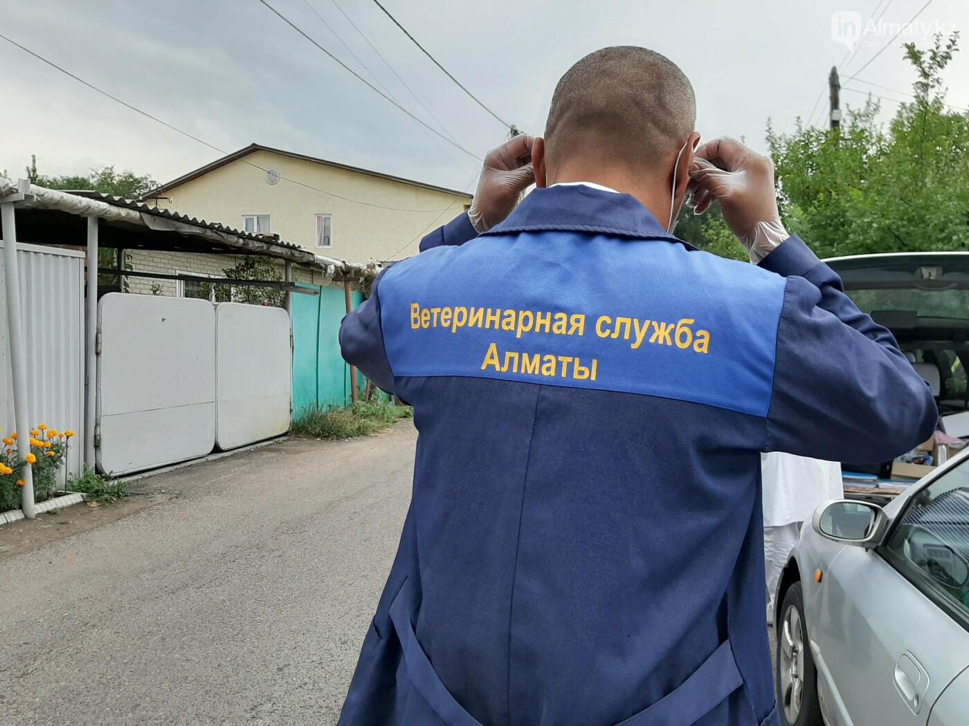 Как проходит бесплатное чипирование собак и кошек в Алматы. Фото/видео, фото-1